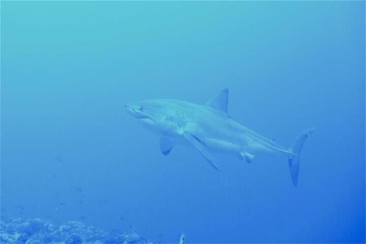 Advanced 2-Tank Expedition Dive including Molokini Drift Dive ...